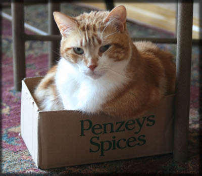 Seth in a box. © Colehaus Cats.