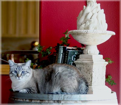 Decorating with Cats - Maxx. © Colehaus Cats.