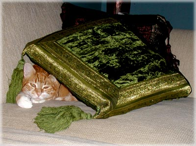 Zooot Pillow.  © Colehaus Cats.