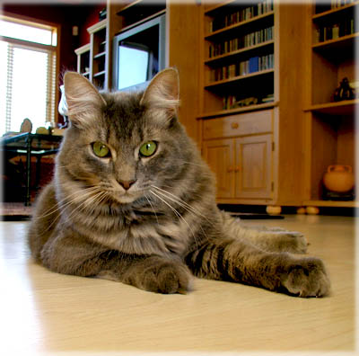 Cameron's Right Pose. © Colehaus Cats.