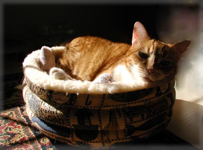 Zooot Finds the Sun. © Colehaus Cats.